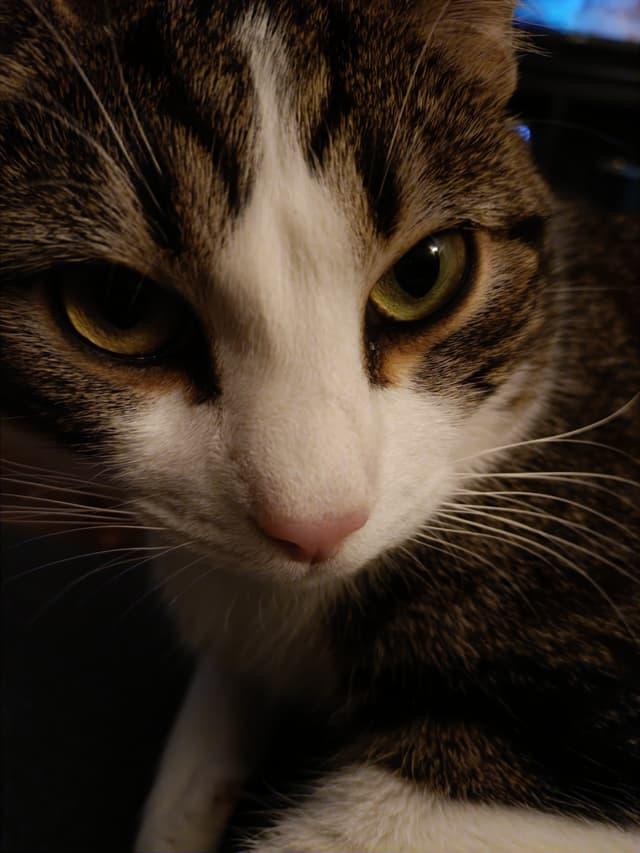 Quand ton chat se prend en selfie la nuit