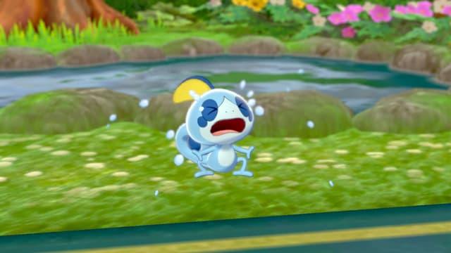 Larméléon, starter de type Eau dans Pokémon Épée et Bouclier.