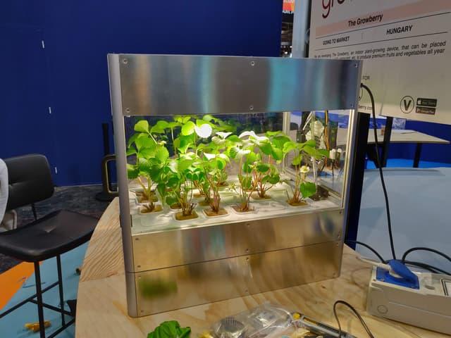 Growberry, une innovation vous permettant de faire pousser un potager en ville, même en intérieur.