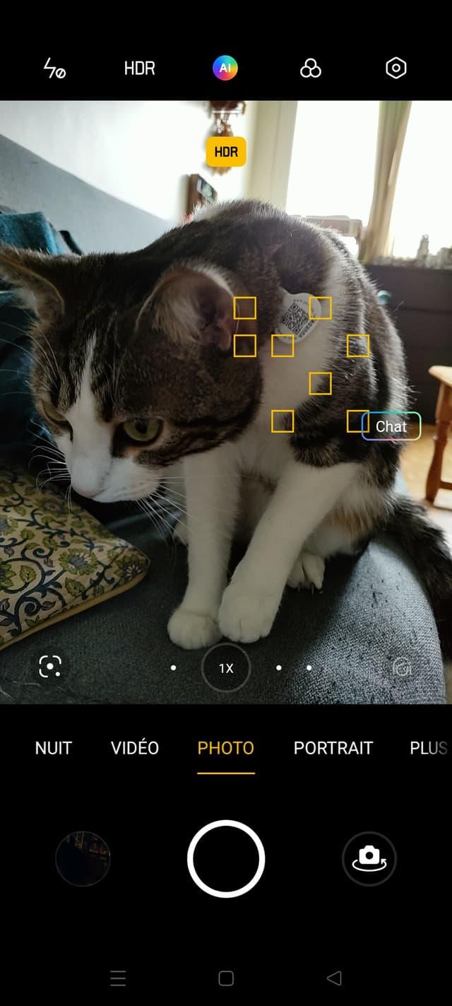 Le chat Sauron n'est donc pas un chien, merci OPPO Find X3 Lite