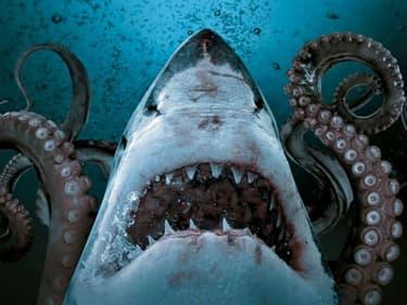 Les films de requins en VOD, une sélection qui a du mordant