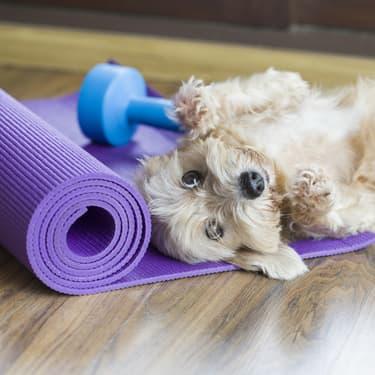 Avec quels animaux peut-on faire du yoga ?