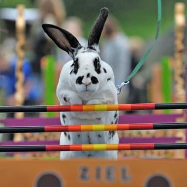 Le Kaninhop : un sport qui fait sauter les lapins !