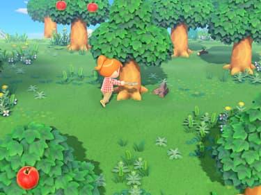 Animal Crossing : 8 choses qu'il faut faire tous les jours