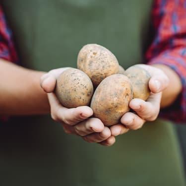 Au CES, il présente une... patate connectée